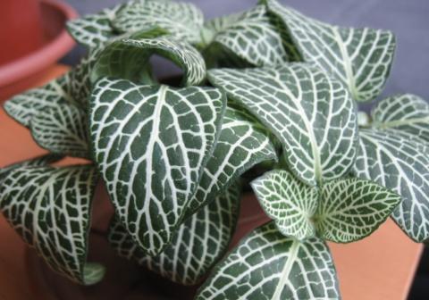 Biodiversit v g tale d 39 appartement bibioth que for Petites plantes vertes
